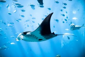 Manta Ray Night Snorkel in Kona – Was It Scary?