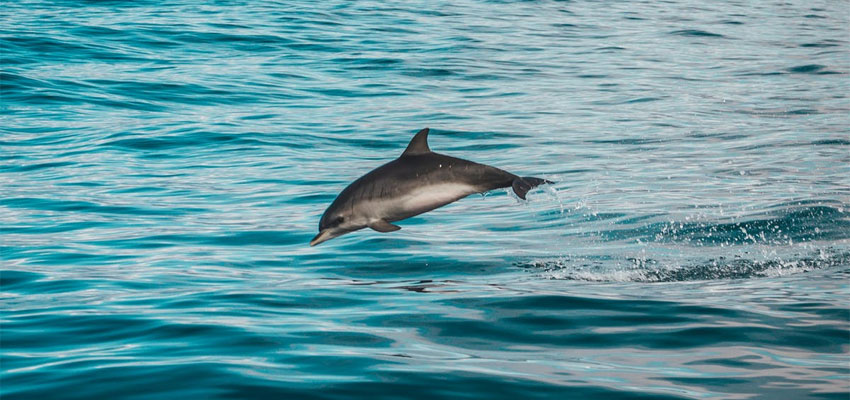 How to Swim with Dolphins in Kona & What to Expect