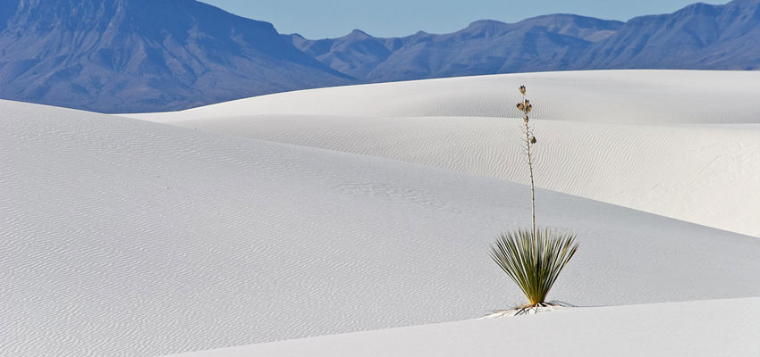 White Sands Plants