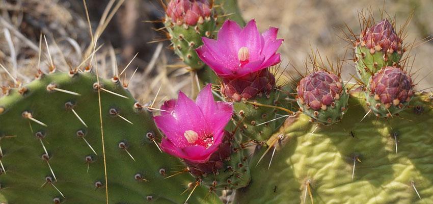 Desert Botanic Gardens