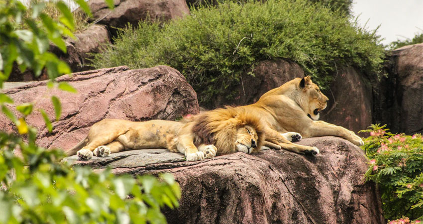 9 Best Zoos in the US to Visit in 2020