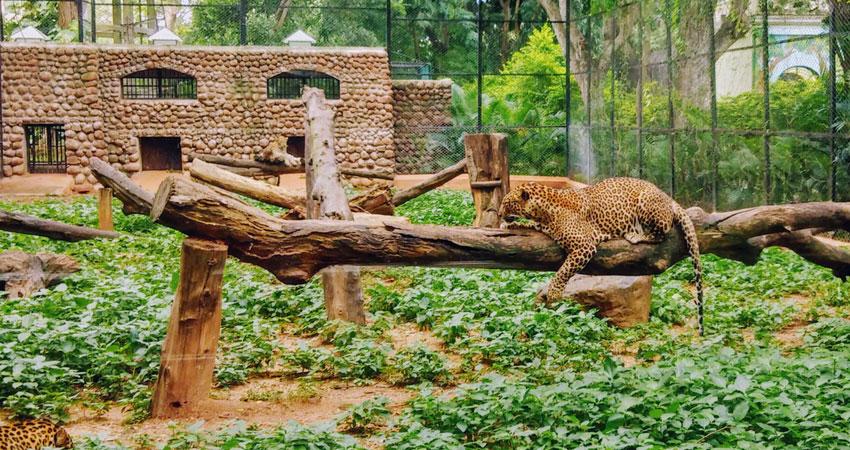 Santa Barbara Zoo Leopard