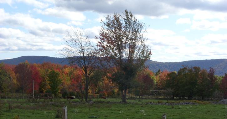 County Road, The Catskills, New York