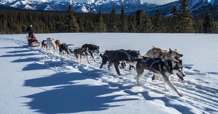 Best Winter Vacations - Dogsledding
